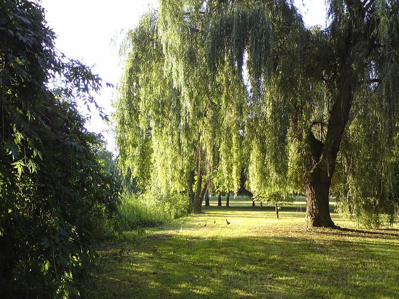 Vrby, Šimkovy sady
