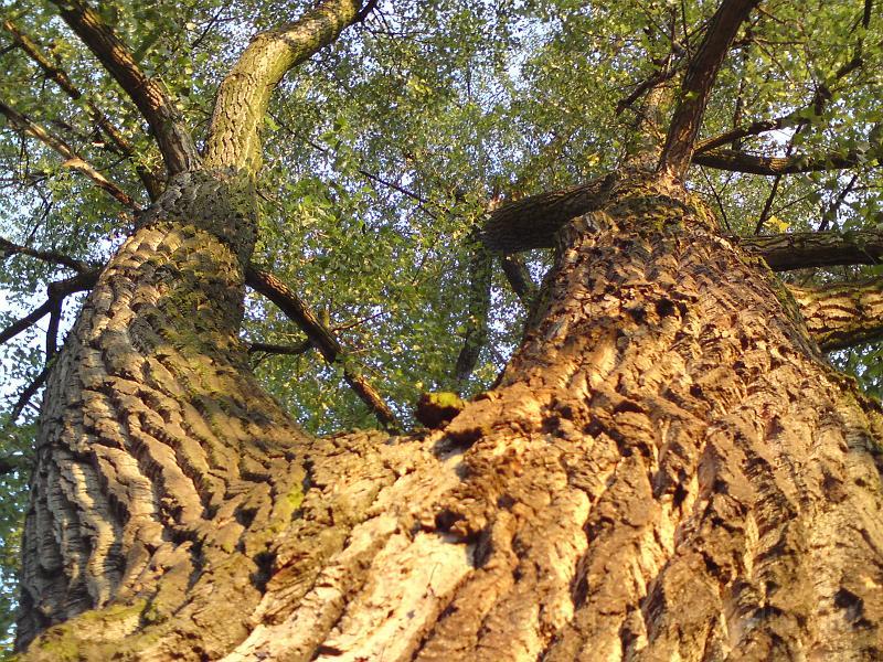 Vzhůru do koruny stromu