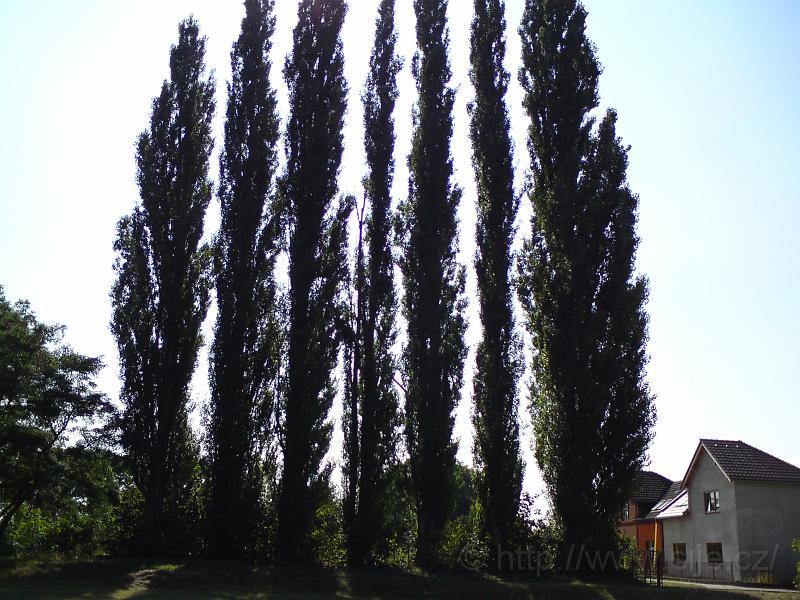 Topolové stromořadí