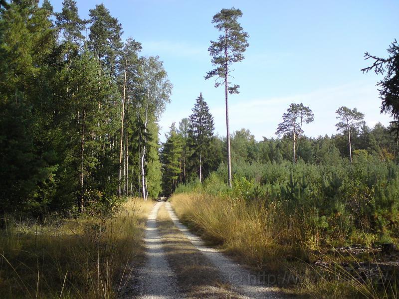 Hra barev v lese