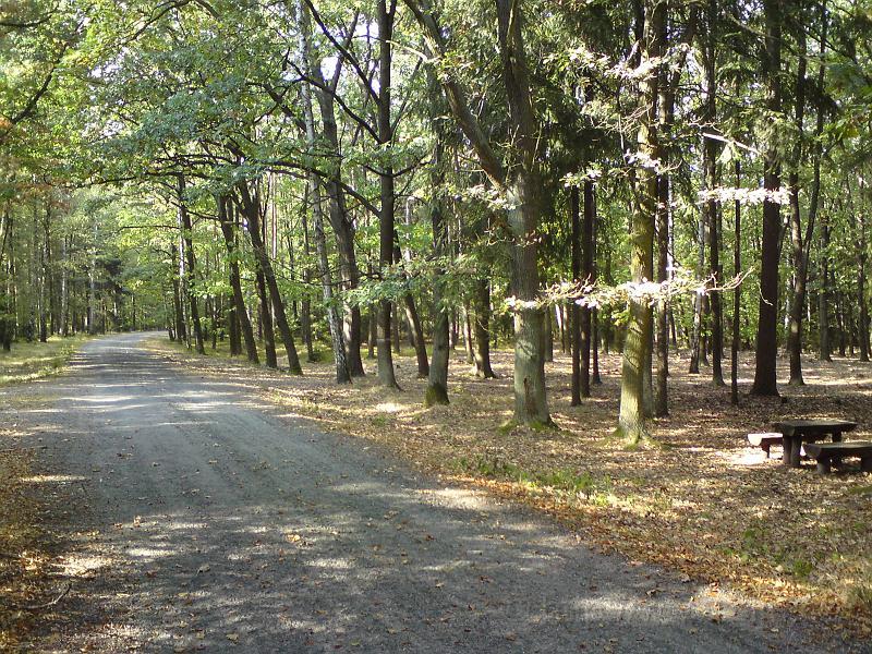 Lesní křižovatka