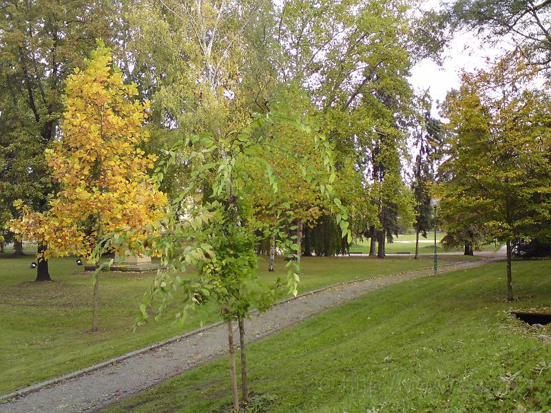 Žižkou skrývá listí