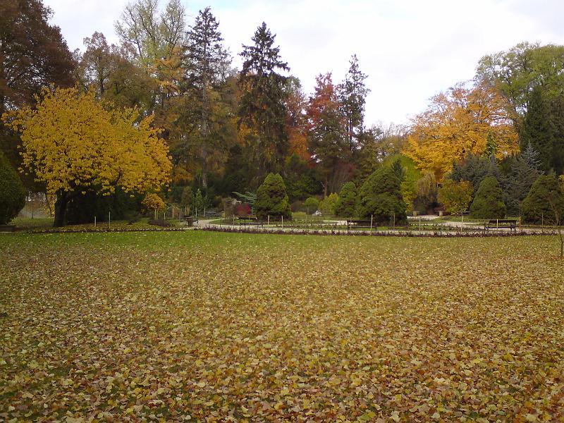 Padlé listí na podzim