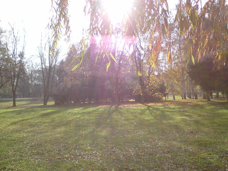 Slunce v smuteční vrbě