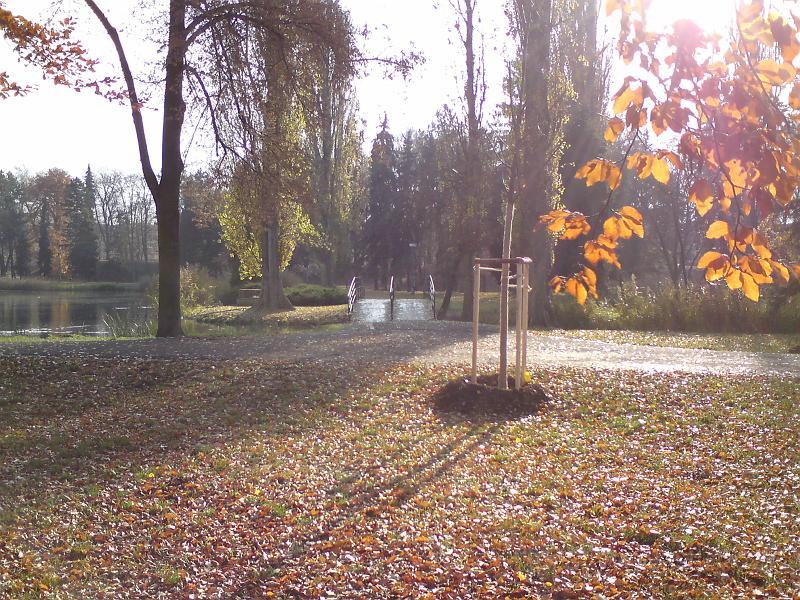 Podzimní Slunce v listí