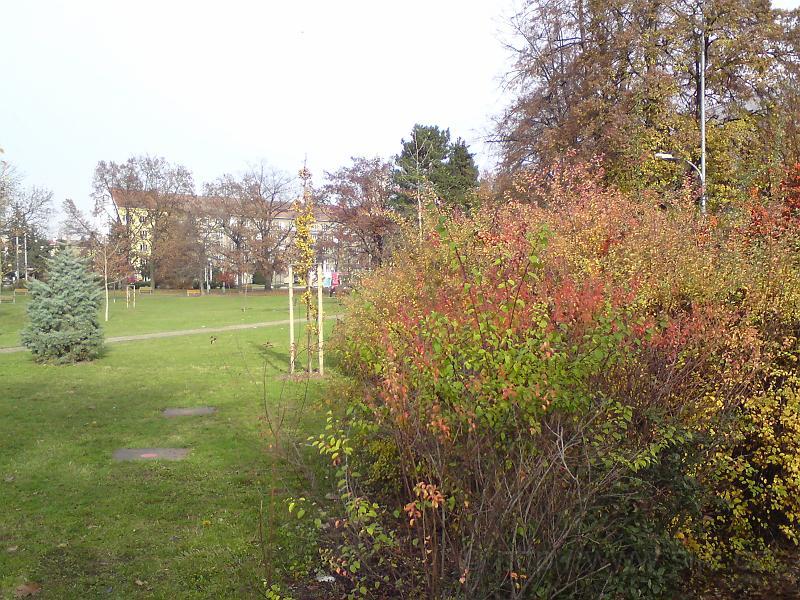 Sukovy sady na podzim
