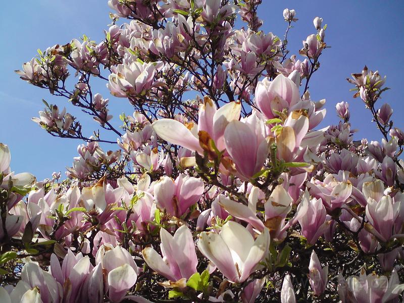 Jaro dokáže uchvátit