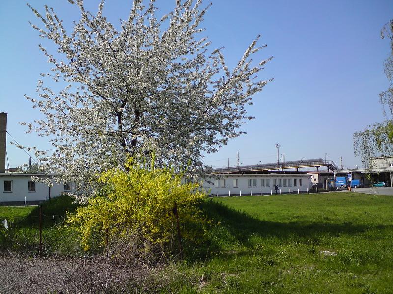 Dvojí barva květů zjara