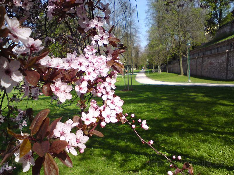 Potěšme se jarními květy
