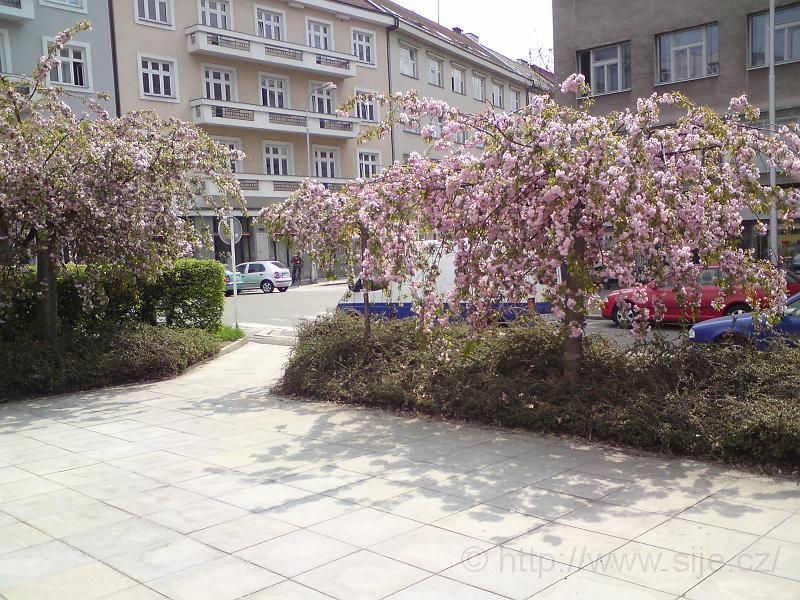 Růžek Ulrichova náměstí