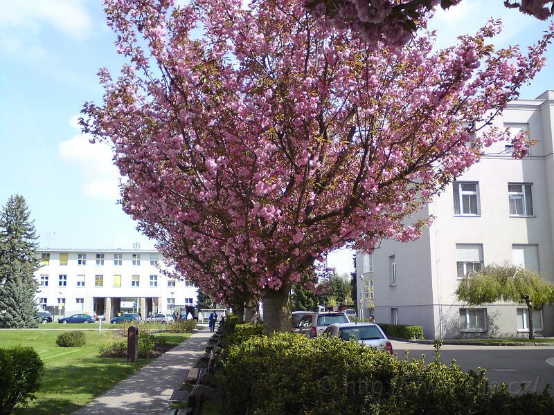 Jaro v nemocnici potěší