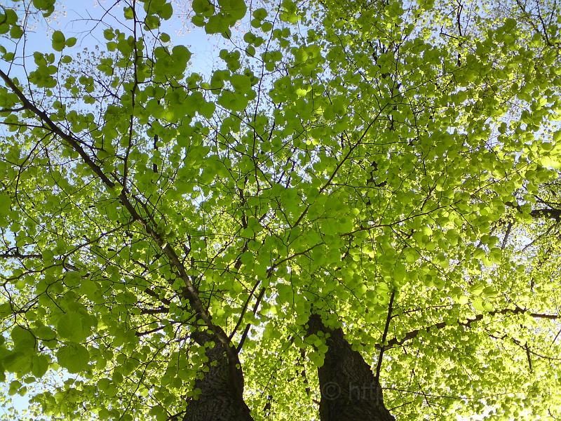 Sytá jarní zeleň buku
