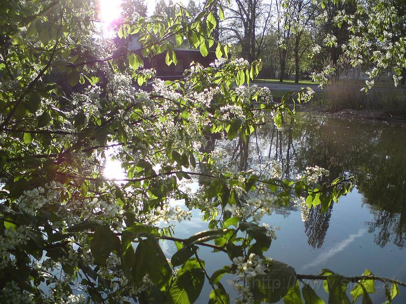 Slunce, voda, květy