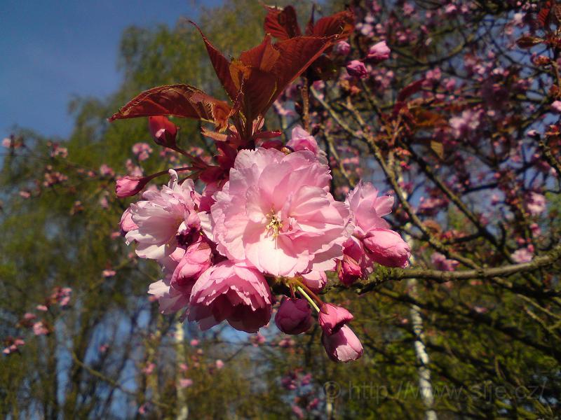 Některé květy moc voní