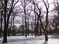 Východní část Sadů Víta Nováka v zimě