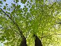 Sytá jarní zeleň buku v sadech Víta Nováka