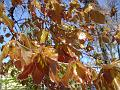 Mladé bukové listí v Kubištových sadech