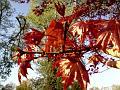 Syté jarní javorové listí