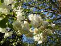 Jaro patří k obdobím rozkvětu a velké naděje